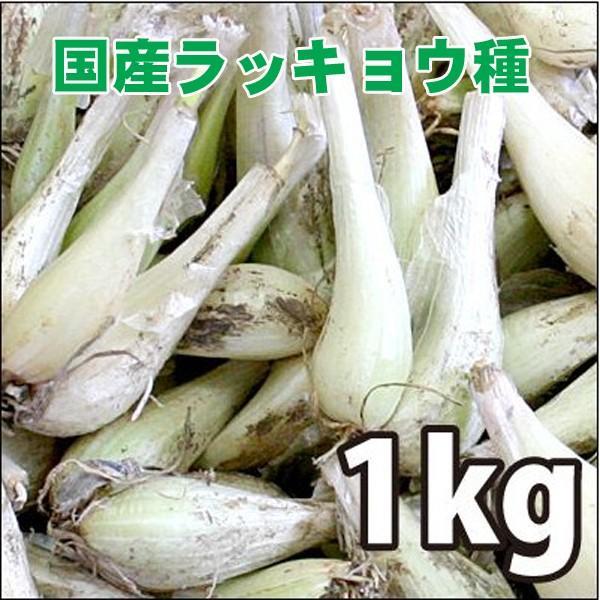 野菜・種/苗 国産ラッキョウ・生もの種 量り売り1kg|vg-harada