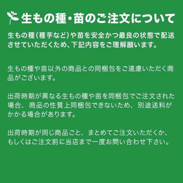 野菜・種/苗 [秋ジャガイモ種芋]じゃがいも種芋 出島・生もの種 量り売り1kg |vg-harada|03