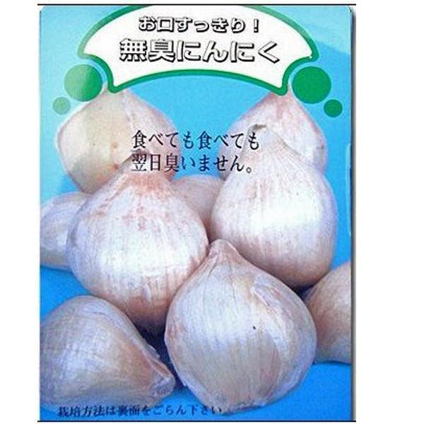 野菜・種/苗 無臭にんにく種子  250g|vg-harada