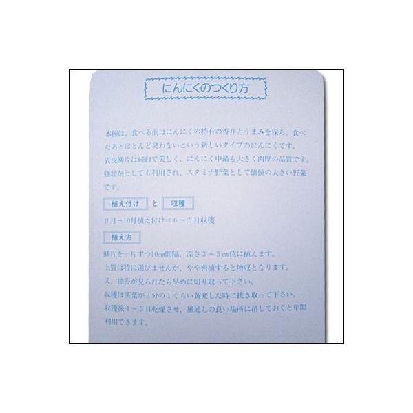 野菜・種/苗 無臭にんにく種子  250g|vg-harada|03