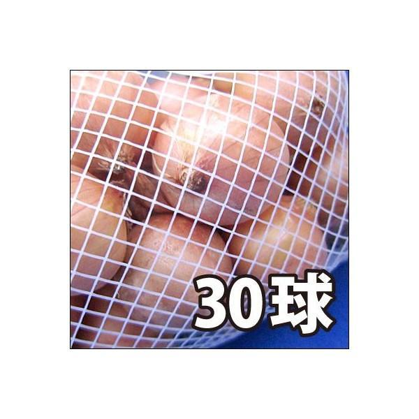 野菜・種/苗 ホームたまねぎ[タマネギ]・ 玉葱 生もの種 種子 量り売り30球 [野菜球根]|vg-harada|02