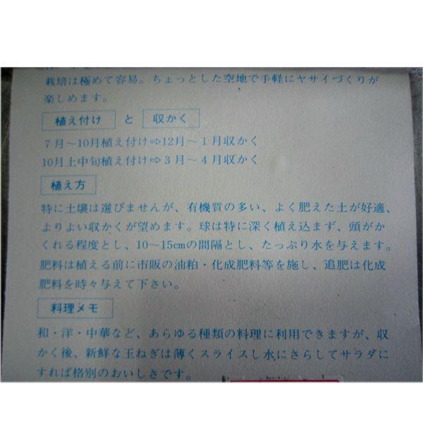 野菜・種/苗 ホームたまねぎ[タマネギ]・ 玉葱 生もの種 種子 量り売り30球 [野菜球根]|vg-harada|03