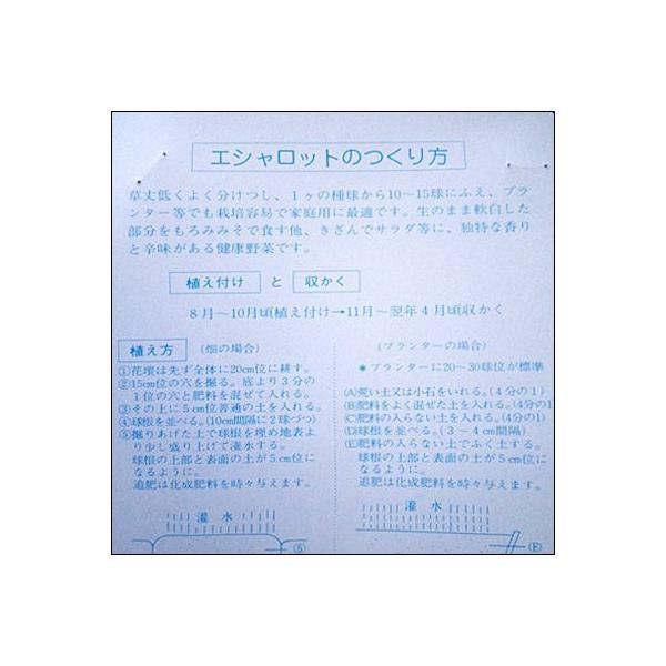 野菜・種/苗 エシャロット・エシャレット 生もの種 量り売り 200g[野菜球根]|vg-harada|03