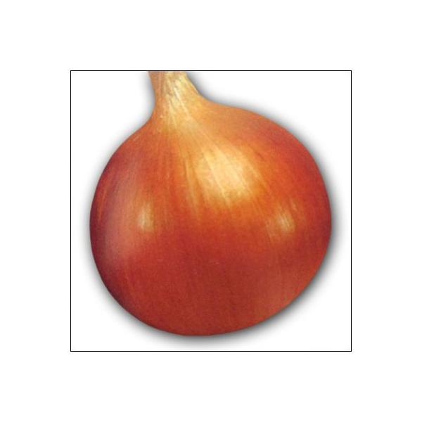 野菜の苗 O・P黄 タマネギ 玉葱 玉ねぎ  100本入|vg-harada|02
