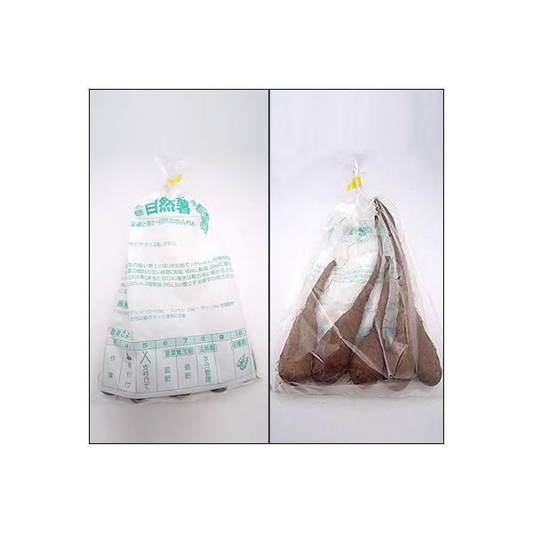 野菜・種/苗 自然薯/改良短形自然薯(ヤマイモ)・生もの種 5本入/一袋|vg-harada|02