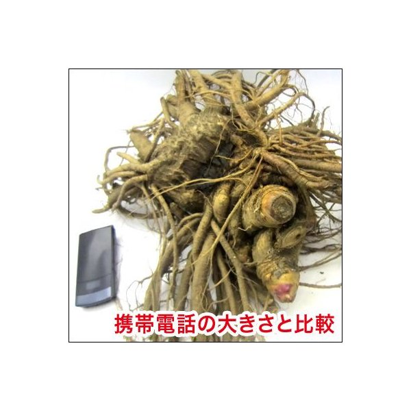 野菜の苗 山うど 苗 大株|vg-harada|02