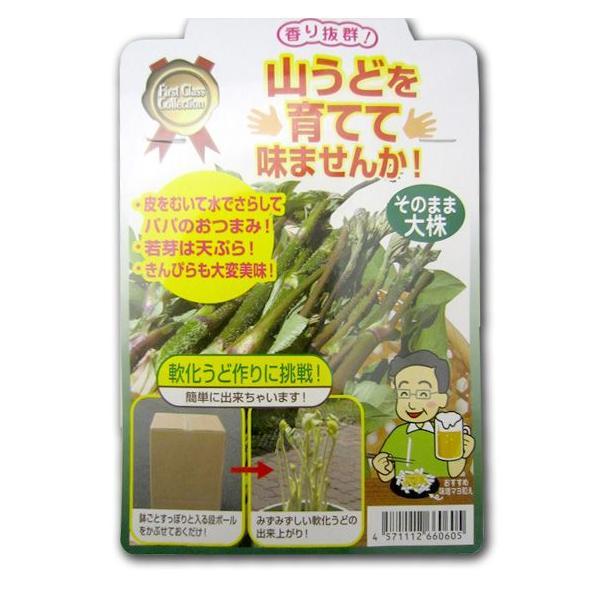野菜の苗 山うど 苗 大株|vg-harada|03