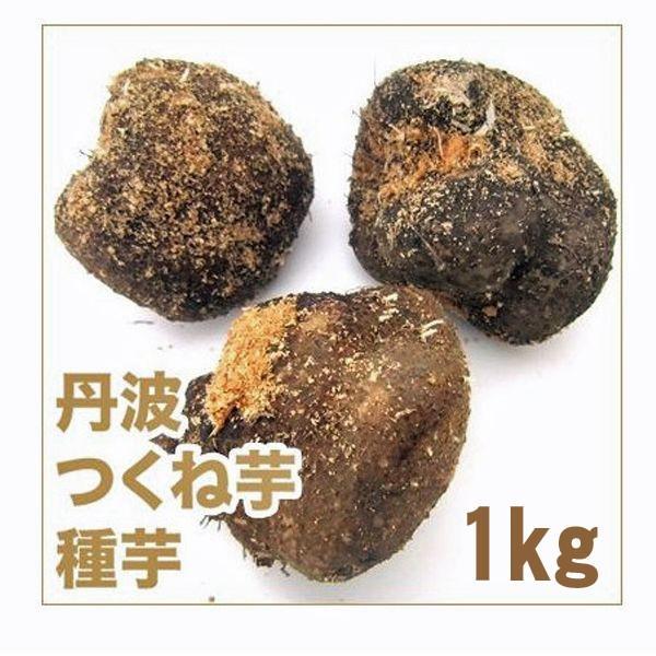 野菜・種/苗 つくね芋/丹波つくね芋 山の芋・山芋・ヤマイモ 種芋・生もの種 約1kg[約4個]|vg-harada