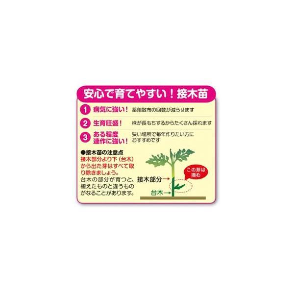 野菜の苗 トマトベリー・ミニトマト 接木苗 4ポット入りセット |vg-harada|02