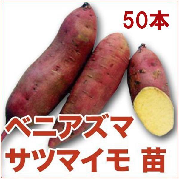 野菜の苗 ベニアズマ/紅東・ベニ東 サツマイモ さつま サツマ 苗 50本入り |vg-harada