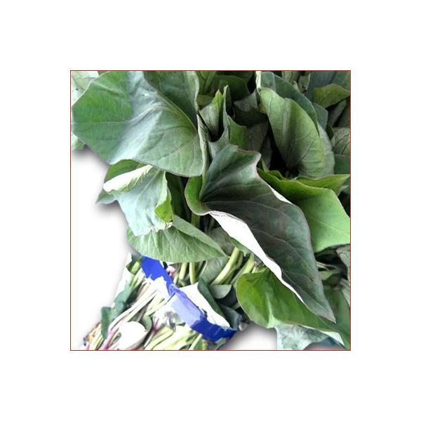 野菜の苗 ベニアズマ/紅東・ベニ東 サツマイモ さつま サツマ 苗 50本入り |vg-harada|02