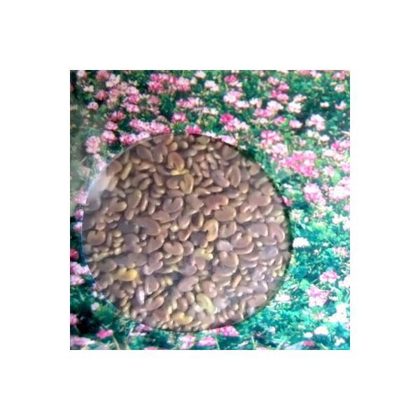 今年も大特価!れんげ・レンゲ草・蓮華草 花の種 種子 1kg|vg-harada|03