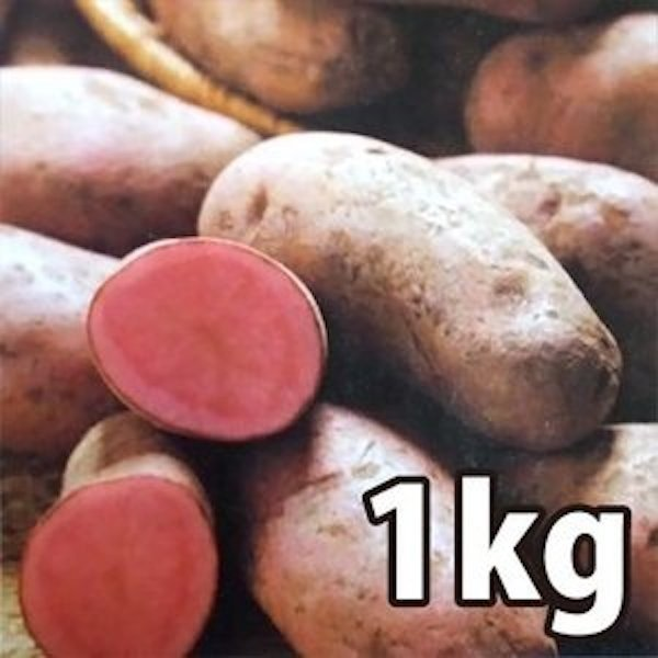 野菜・種/苗[春ジャガイモ種芋]ノーザンルビー じゃがいも種芋・生もの種 混玉<SS〜Lサイズ>量り売り1kg|vg-harada