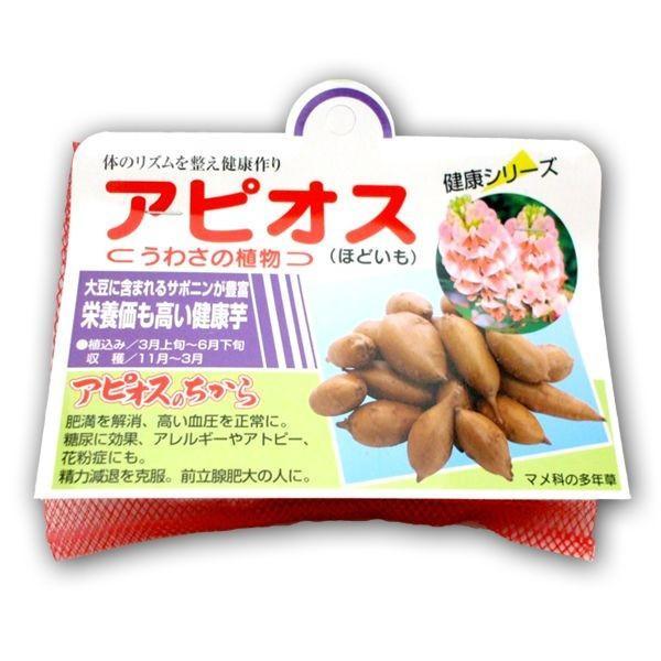 野菜・種/苗 アピオス・ほどいも 種芋・生もの種 50g|vg-harada