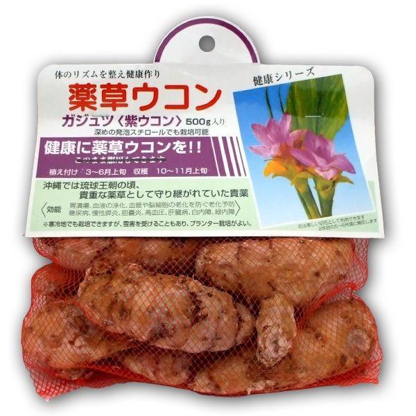 野菜・種/苗 ガジュツ[紫ウコン]薬草ウコン 種・生もの種 500g vg-harada
