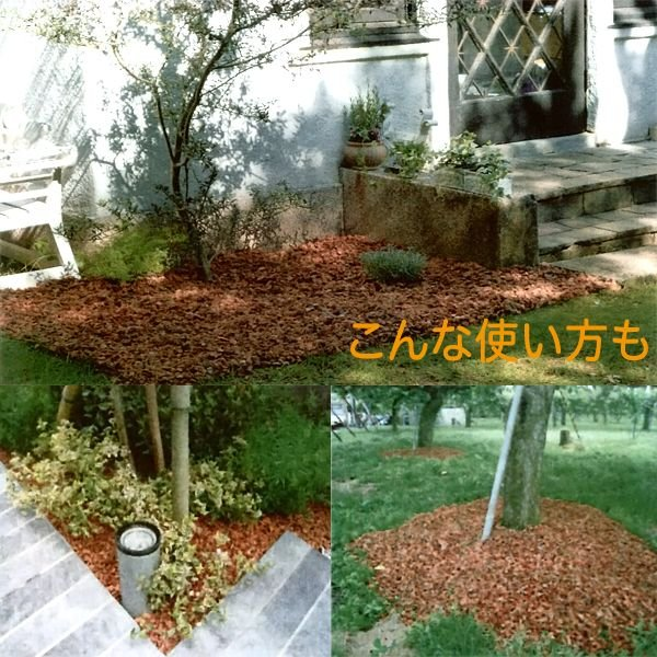 ヤシの実チップ あく抜きベラボン 4リットル(M粒/約5ミリ角) 園芸用品 vg-harada 03