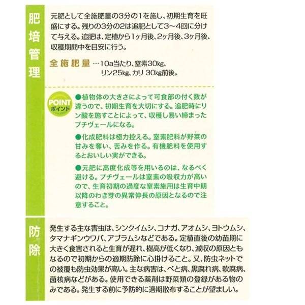 数量限定!野菜の苗 健康野菜 プチヴェール・非結球芽キャベツ/きゃべつ 苗 4ポット入りセット |vg-harada|03