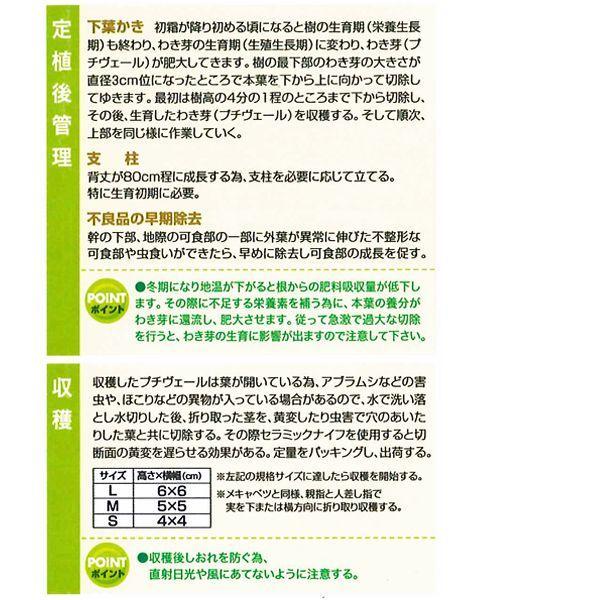 数量限定!野菜の苗 健康野菜 プチヴェール・非結球芽キャベツ/きゃべつ 苗 4ポット入りセット |vg-harada|04
