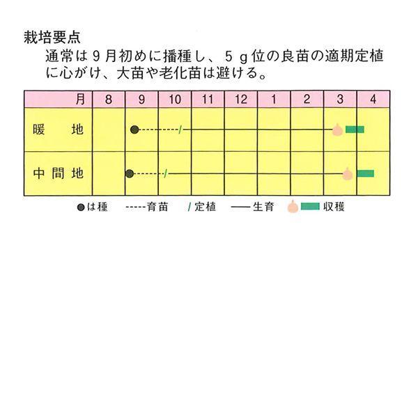 野菜の苗 超極早生 ソユーズ3号・タマネギ 玉葱 玉ねぎ  100本入|vg-harada|03