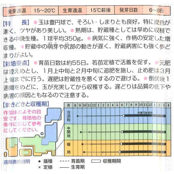 野菜の苗 中晩生 ネオアース・タマネギ 玉葱 玉ねぎ  100本入 vg-harada 03