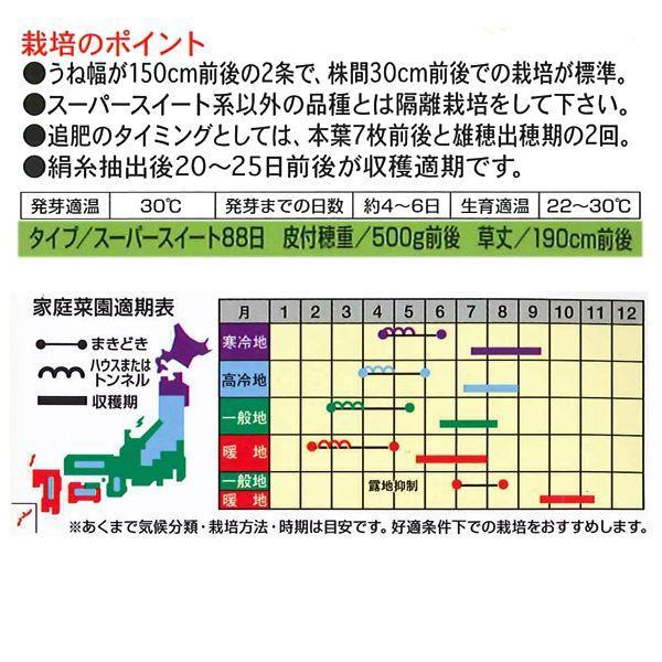 野菜の種/種子 おおもの・とうもろこし・スイートコーン 2000粒  (大袋)|vg-harada|02