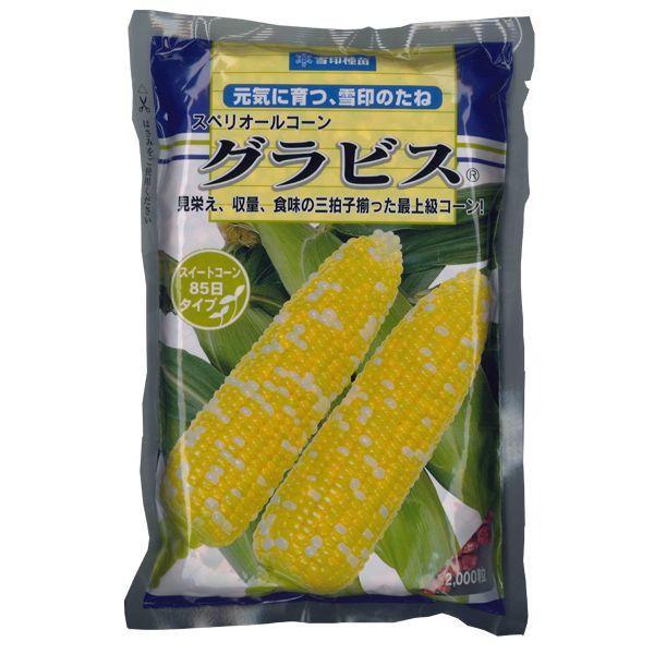 野菜の種/種子 スペリオールコーン グラビス・とうもろこし 2000粒  (大袋)
