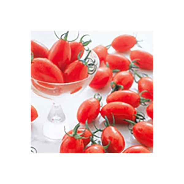 野菜の種/種子 アイコ・ミニトマト ペレット200粒(メール便発送/大袋)サカタのタネ 種苗|vg-harada