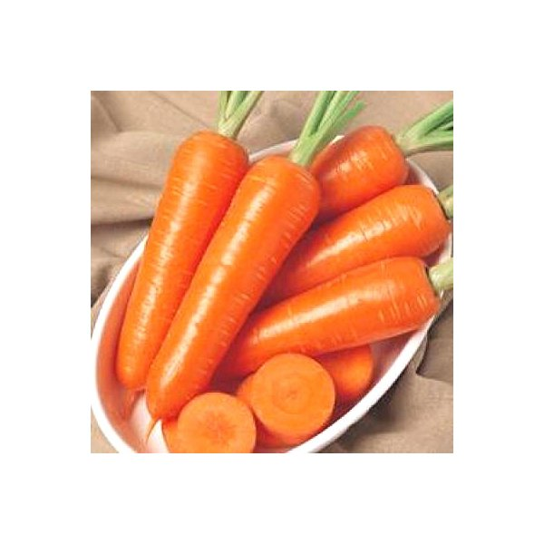 野菜の種/種子 グランプリ・ニンジン にんじん 人参 700粒(メール便発送)タキイ種苗