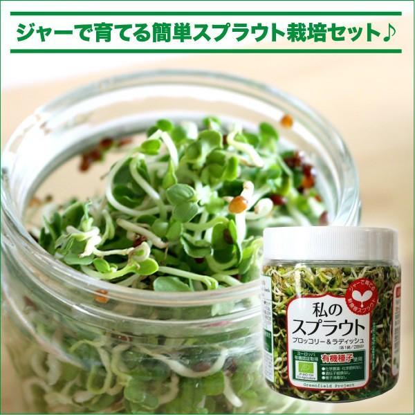 私のスプラウト ジャー栽培セット(ブロッコリー&ラディッシュ スプラウト種子付セット)|vg-harada