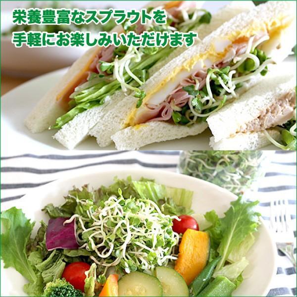 私のスプラウト ジャー栽培セット(ブロッコリー&ラディッシュ スプラウト種子付セット)|vg-harada|04