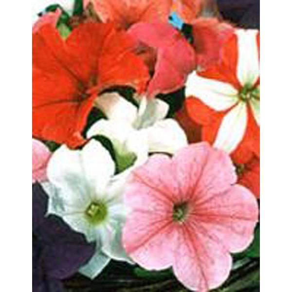 花の種(営利用)ペチュニア イーグル ミックス 1000粒 ペレット種子 サカタのタネ 種苗(メール便発送)