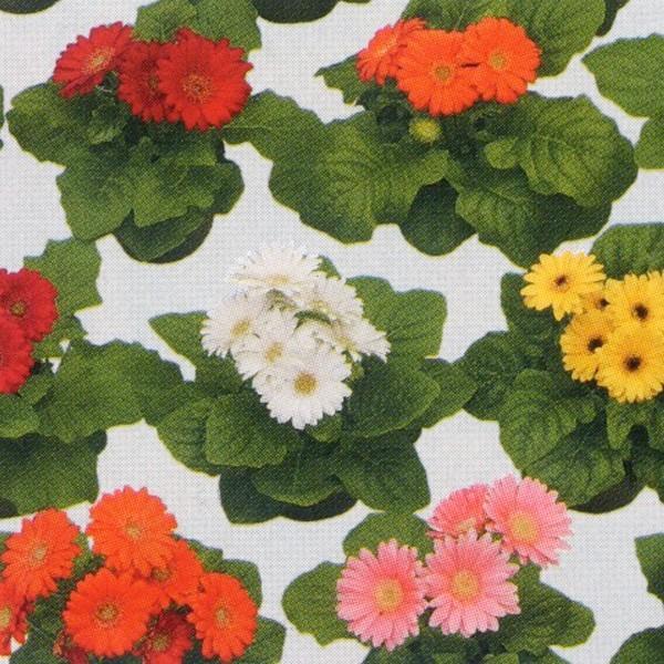 花の種(営利用)ガーベラ F1フロリライン ミニ ミックス 500粒 タキイ種苗(メール便発送)