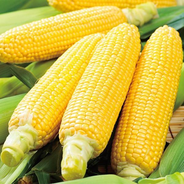 野菜の種/種子 ゴールドラッシュ86・とうもろこし トウモロコシ 2000粒(大袋)サカタのタネ 種苗【12月下旬頃発送】