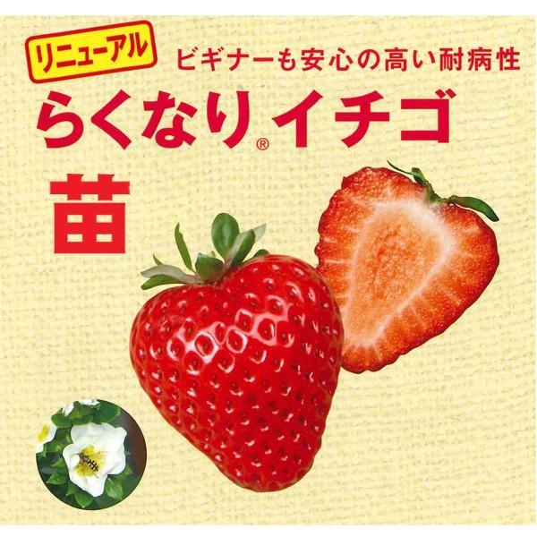果物の苗 四季なりイチゴ らくなりイチゴ苗 いちご苗 イチゴ苗 4ポットセット|vg-harada