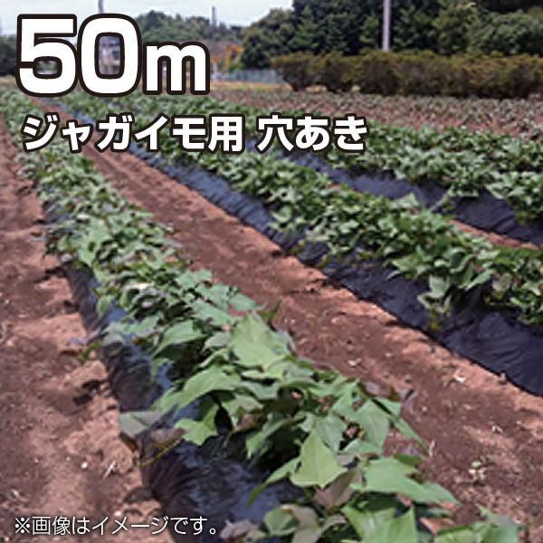 農業用マルチシート マルチフィルム ジャガイモ用 穴あき 黒 50m(幅95cm/薄さ0.02mm/穴径8cm 並列)農業資材