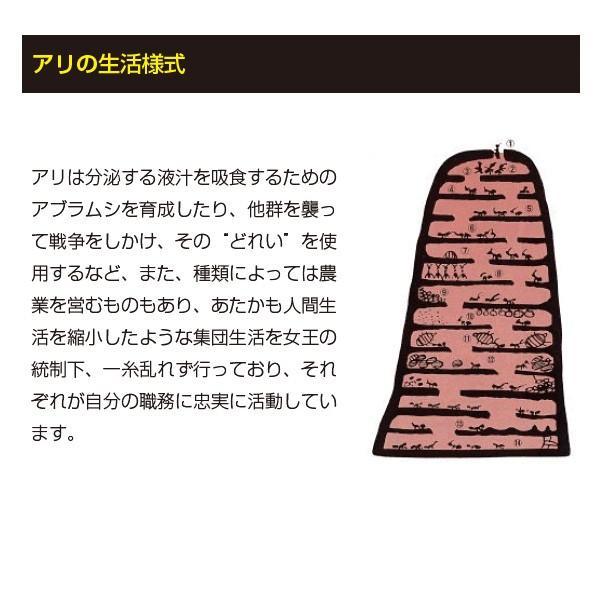 アリの巣退治 アリメツ 専用容器付セット 蟻 退治 駆除剤 薬剤|vg-harada|05
