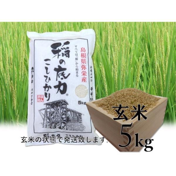 コシヒカリ 稲の底力こしひかり玄米 5kg 島根県 お取り寄せ お土産 ギフト プレゼント 特産品 名物商品 お中元 御中元 おすすめ