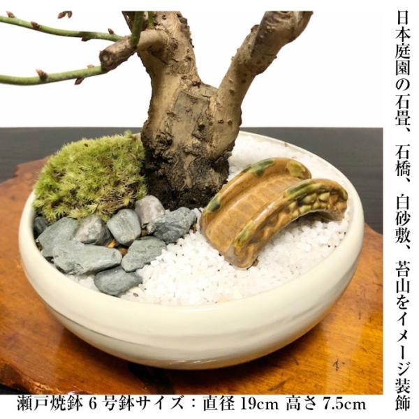 盆栽 梅 紅白梅 盆栽 室内 初心者 おしゃれ盆栽 癒し 植物 フラワーギフト 誕生日 ギフト|wagokorobonsai|08