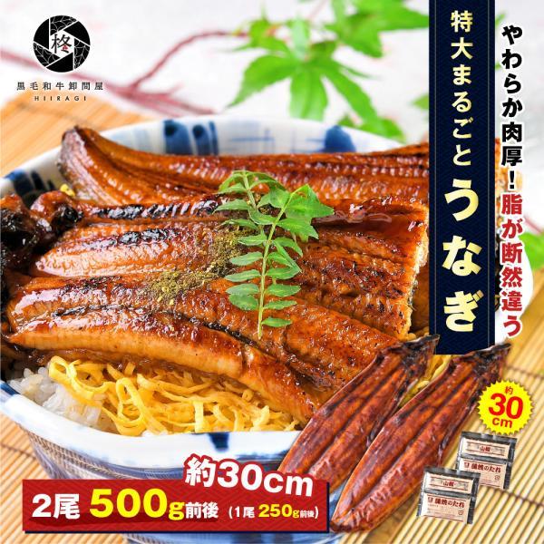 鰻 お取り寄せ 特大 うなぎ 蒲焼き 2尾 (タレ 山椒 付) 送料無料 お取り寄せグルメ ギフト 贈り物 通販 冷凍食品