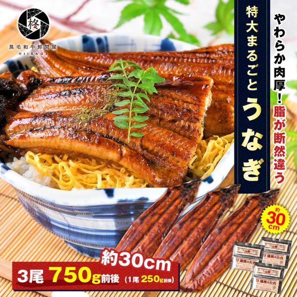 鰻 お取り寄せ 特大 うなぎ 蒲焼き  3尾 (タレ 山椒 付) 送料無料 お取り寄せグルメ ギフト 贈り物 通販 冷凍食品