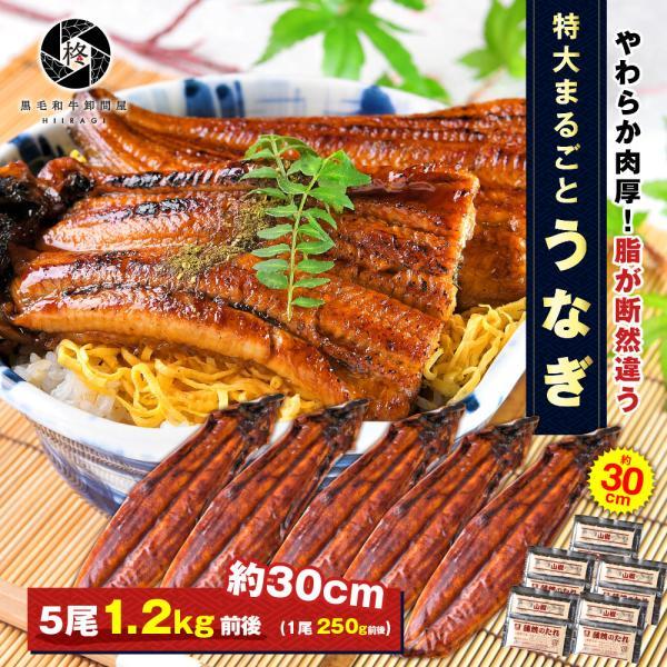 鰻 お取り寄せ 特大 うなぎ 蒲焼き 5尾 (タレ 山椒 付) 送料無料 お取り寄せグルメ ギフト 贈り物 通販 冷凍食品