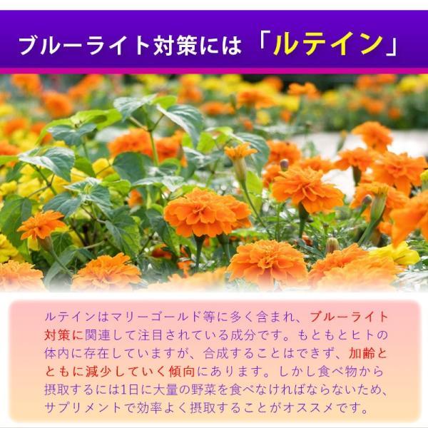 ビルベリー&ルテイン 60粒 3袋セット 合計180粒 コエンザイムQ10配合  メール便発送|wakasugi2012|10
