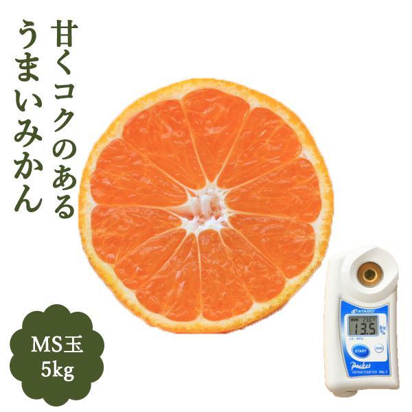 みかん 5kg 甘い MS玉 和歌山 マルチ被覆栽培 箱買い 細野さんのコクのあるミカン 紀南みかん 極早生 送料無料