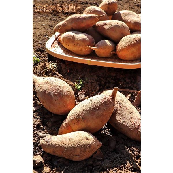 産地直送 安納芋 さつまいも 5kg 小玉限定 3S〜Sサイズ 鹿児島県種子島 訳あり 家庭用 サイズ混合 蜜芋 減農薬栽培|wamers|02
