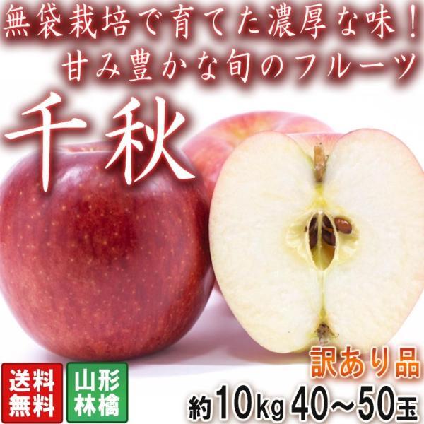 千秋 りんご 約10kg 40〜50玉入り 訳あり品 山形県産 ジューシーな果肉に強い甘みと程よい酸味!お得な赤林檎