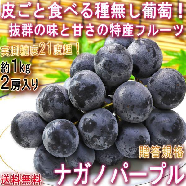 ナガノパープル 種無し葡萄 約1kg 2房 長野県産 贈答規格 大房限定 JA共撰品 特産品の高級フルーツ!皮ごと食べる大粒の黒ぶどう