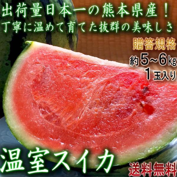 温室スイカ 赤肉西瓜 約5〜6kg 1玉入り 熊本県産 贈答規格 生産量日本一の大産地、熊本で育てた抜群の味!甘さと食感の美味しいギフトすいか