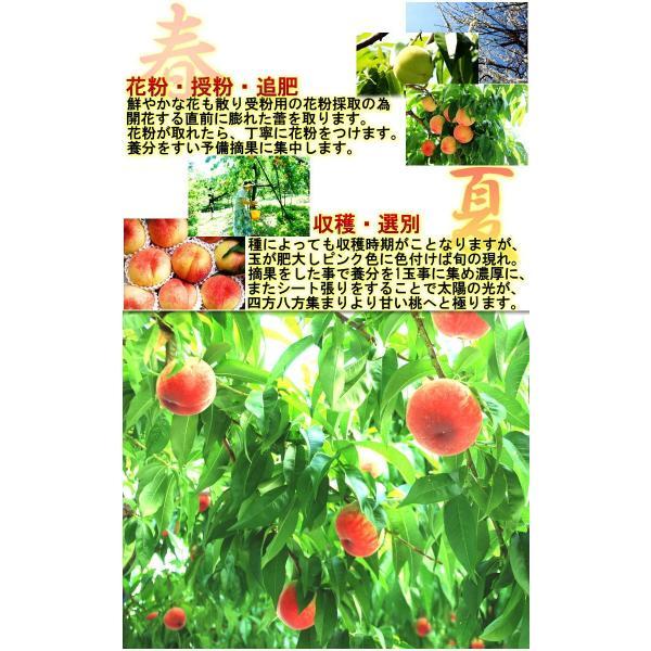 ミスピーチ 桃 約5kg 15〜22玉 福島県産 贈答規格 JA全農ふくしま 高品質な旬のモモをお届け!光センサー選果 ふくしまプライド。体感キャンペーン|wamers|07