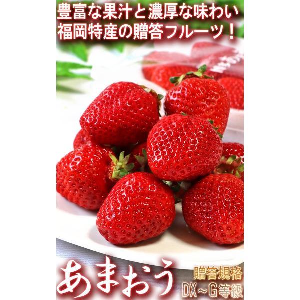 あまおう いちご 約270g×2パック 福岡県産 デラックス〜グランデ規格 贈答品 およそ6年の時間をかけて商品化された苺の王様 博多あまおう|wamers|02