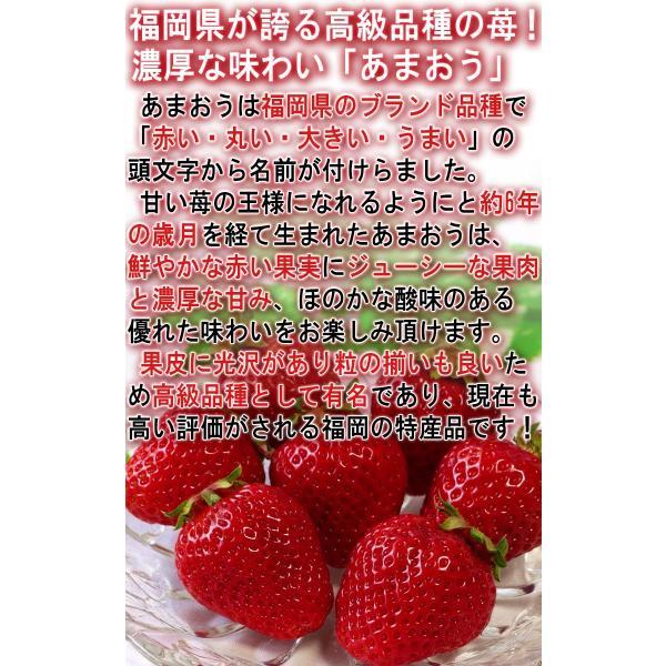 あまおう いちご 約270g×2パック 福岡県産 デラックス〜グランデ規格 贈答品 およそ6年の時間をかけて商品化された苺の王様 博多あまおう|wamers|04